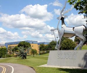 Подготовительные программы University of Surrey